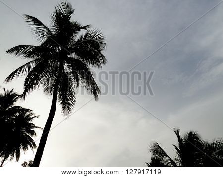 A shot of palms in the coast of Martinique