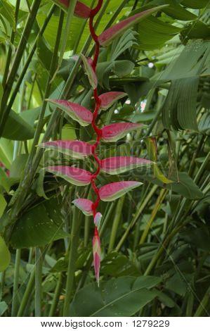 Tropical_Flower