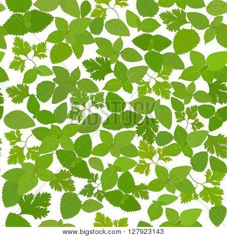 pattern with fresh mint, parsley, basil seamless