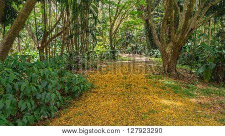 The Hawaiian rain forest of Hoomaluhia botanical gardens in Kaneohe Hawaii on the tropical island paradise of Oahu, Hawaii, USA provides a nature hiking trail for pleasure and enjoyment.