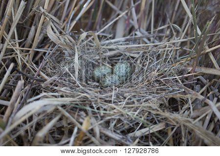 Bird's nest in its natural habitat in the spring season.