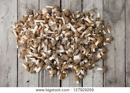 a lot of fresh morel edible mushrooms