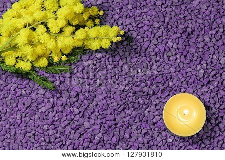 mimosa and candle on violet pebbles for the international womens day