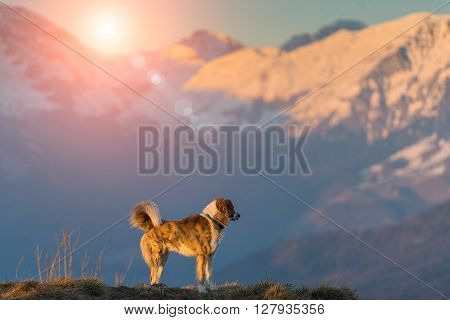 Dog In Mountain Alone