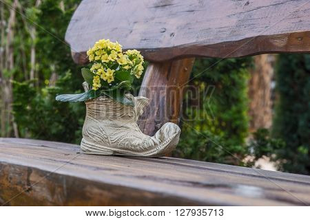yellow flowering kalanchoe in shoe on the garden bench