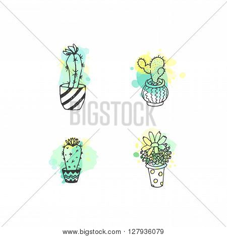 Succulent illustration. Vector cactus hand drawn set with paint splashes. Cacti and in door plants in pots with colorful splatter. Exotic mexican flora design.