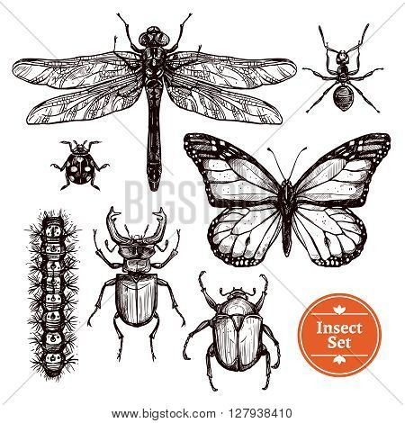 Images set of different insects from ant to butterfly in hand drawn sketch style isolated vector illustration