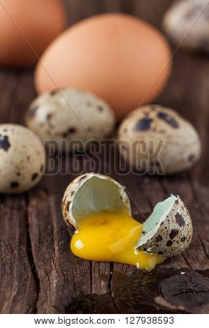 Broken Quail Egg And Chicken One With The Leaked Yolk