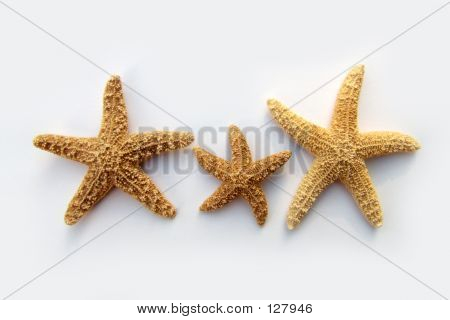 The Starfish Family