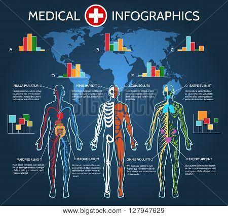 Human Body Anatomy Medical Infographic vector illustration