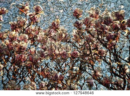 Background With Magnolia