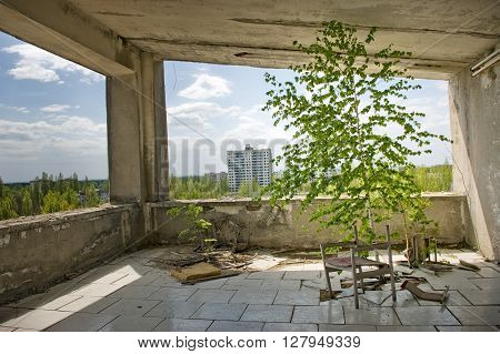 Indoor view of abandoned room overgrown with trees in Pripyat town in Chernobyl Exclusion Zone, place of Chernobyl nuclear disaster in Ukraine