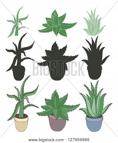 Aloe vera in pots isolated on white. Set of different type Aloe Vera with silhouettes. Vector illustration