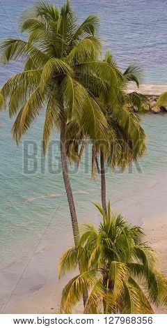 The Caribbean beach on  Martinique island, French West Indies.