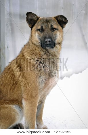 Portrait Of A Dog In A Shelter Of Homeless Animals.