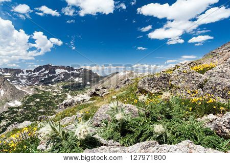 Wildflowers blooming in wilderness landscape of Colorado Rocky Mountains