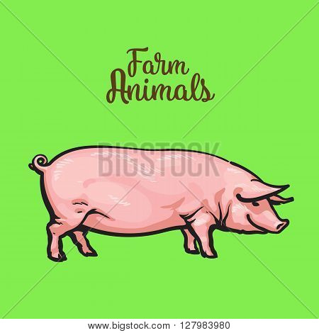 Pink pig on a green background, farm animals pig, sketch illustration drawn by hand, one pig Image thick contented pigs for sale of meat