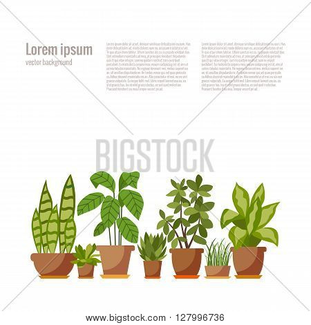 Set of INDOOR plant isolated. Vector flat indoor plant pot illustration. Collection of flat home plant pot. Colorful indoor plants in pot for your design. Home plants icons set