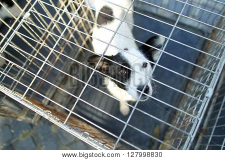 A Sad dog in a metal cage