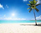 Постер, плакат: море и кокосовой пальмы