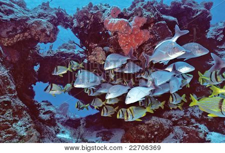 Cozumel Fishes