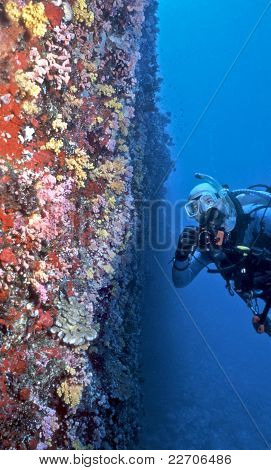 Maldives Soft Coral Wall
