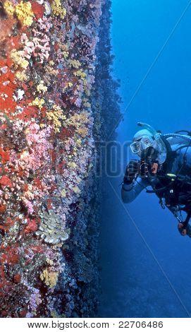 Maldives Soft Coral Wall