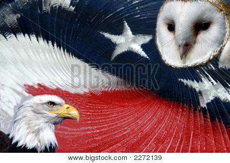 Eagle And Owl Abstract