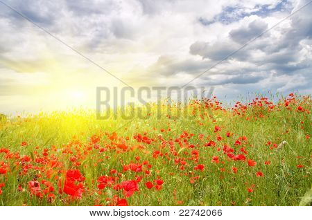cloudy skys over the poppy meadow.