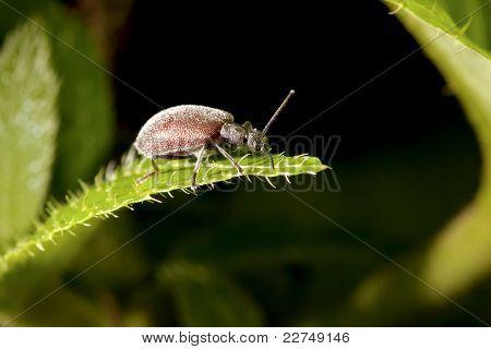 A Bug In Summer