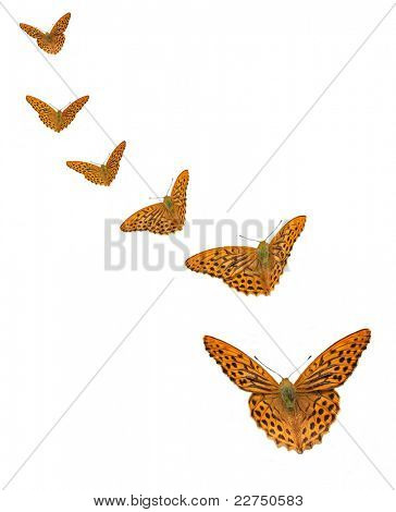 Butterflies isolated