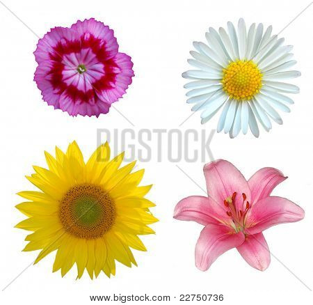 flowers closeup isolated