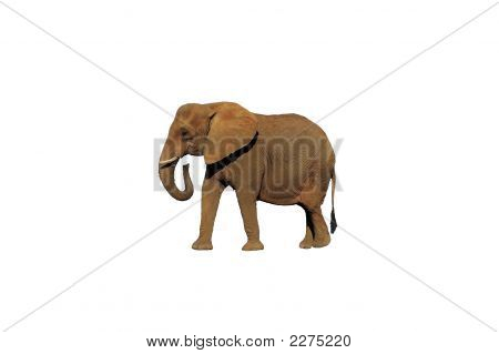 Isolated Elephant 1