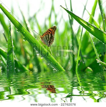 frischer Morgentau und Schmetterling