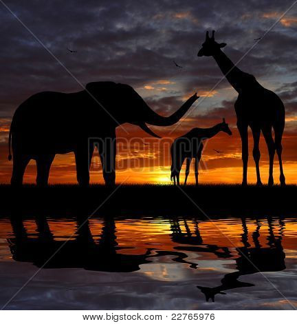 silhouette elephant and giraffes in the sunset