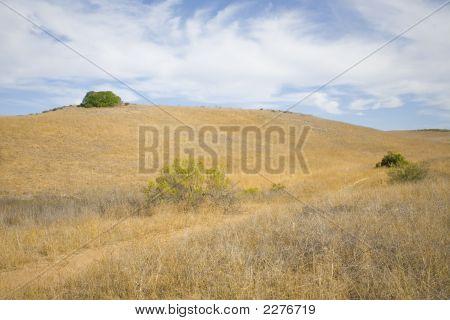 Open Field Scene