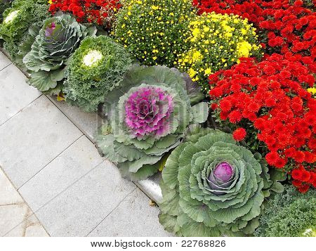 Floral Bed With Seasonal Flowers and Cabbages
