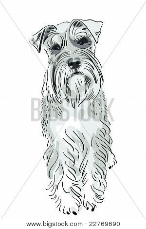 Vector Miniature Schnauzer Dog