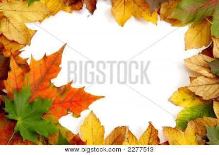 bunte Herbstfarben Laub