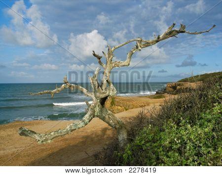 Tree Ocean Shoreline
