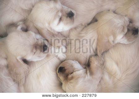 Josie Pups 1