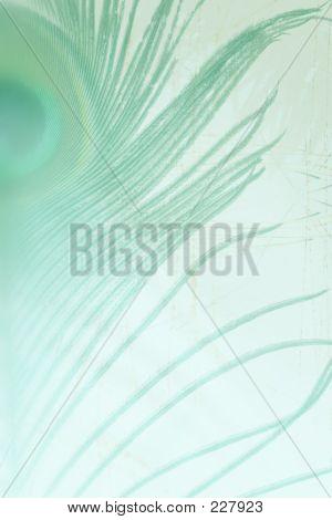 Bckg001