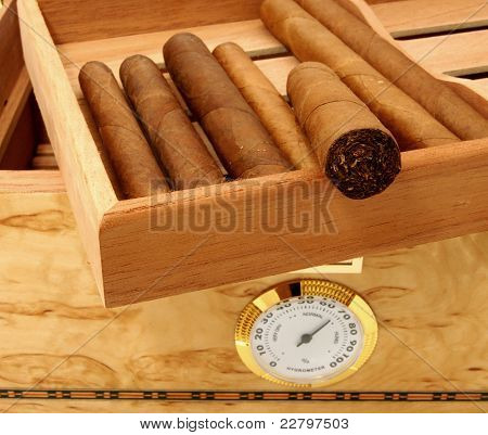 Cigars In Open Humidor Box