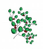 Barberry Leaves Plant Berry Greens Summer Bush Fruit Branch Bush poster