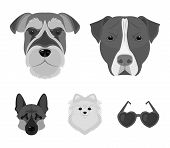 Muzzle Of Different Breeds Of Dogs.dog Breed Stafford, Spitz, Risenschnauzer, German Shepherd Set Co poster
