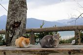 Cats Chilling Out At Karatsu Castle Complex. poster