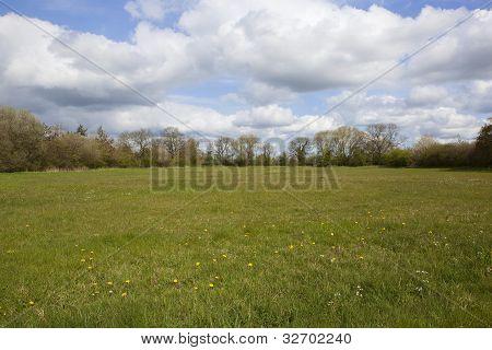 Springtime Grass Pasture