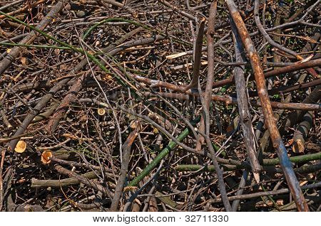 Background - Branches