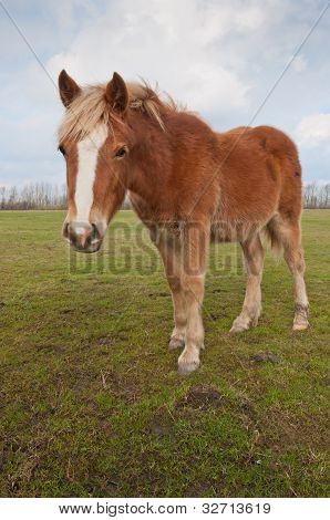Brown Horse Standing On Grass