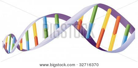 Illustration of DNA helix on white